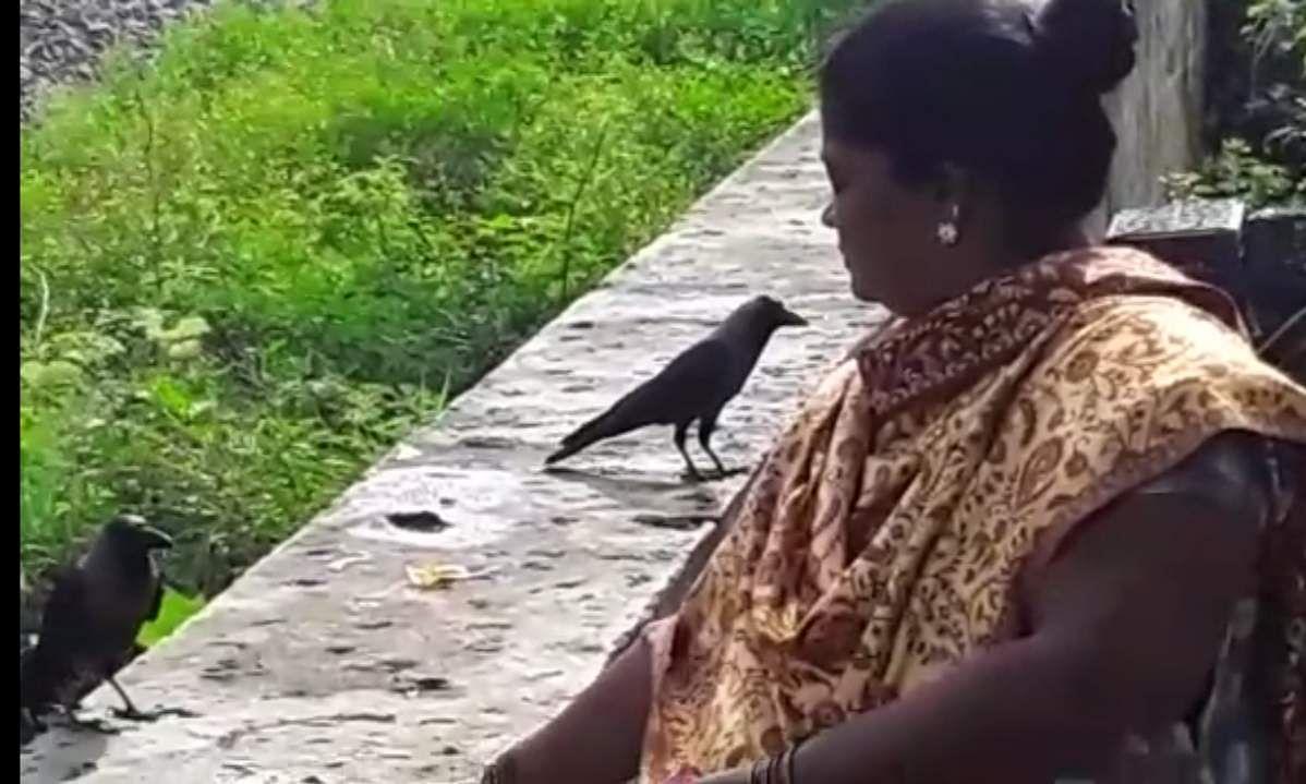 குழந்தைகளெனக் கருதி தினமும் காக்கைகளுக்கு இரை ஊட்டும் பெண்கள் WhatsApp_Image_2020-09-29_at_9.49_.06_AM_