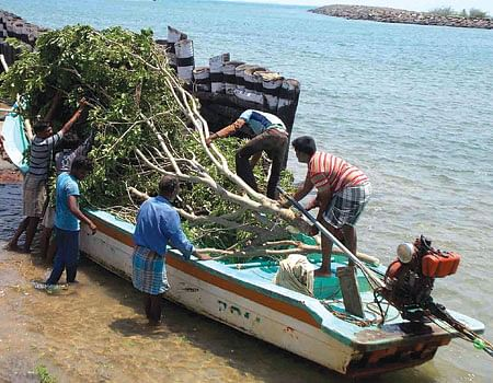 boat_tree