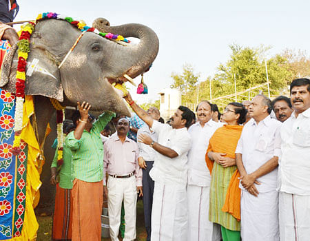 elephant_camp