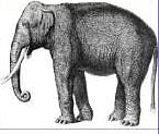 elephant_4.jpg