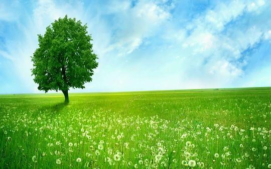 Dream-Nature