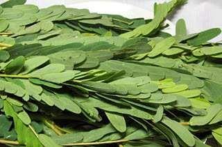 agathi_leaves-