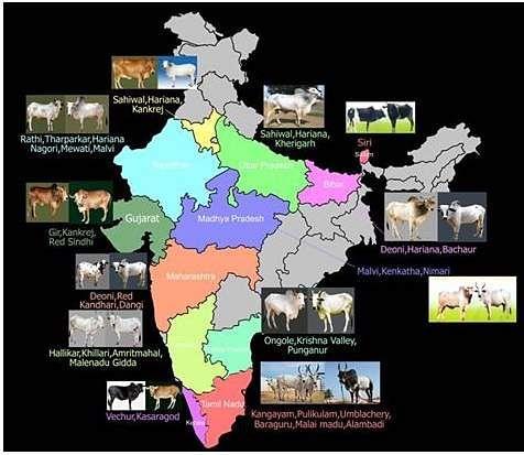 indian_bulls