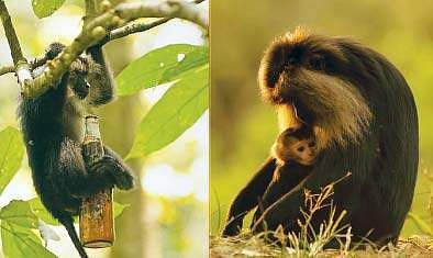 monkey-god