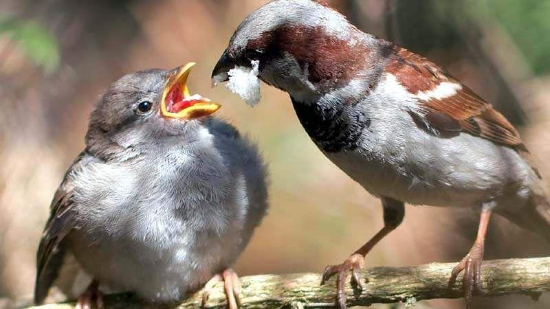 sparrow-bird-12