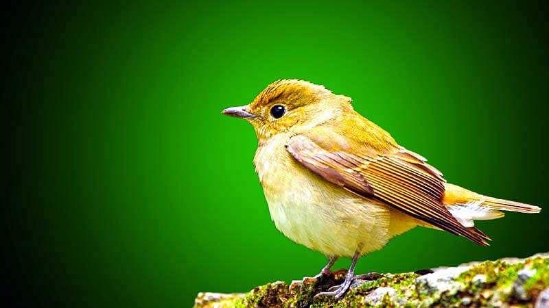 sparrow-bird-15