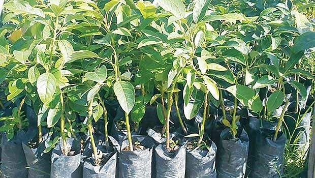 Treeplanting