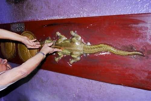 Golden_Lizard