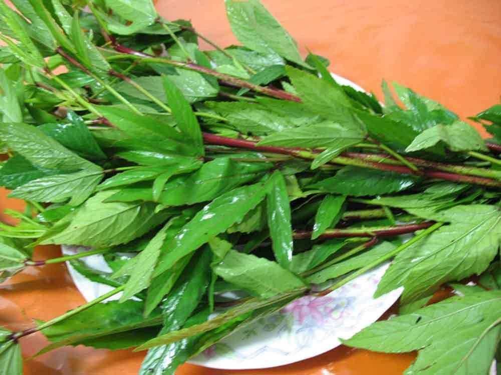 gongura-leaves