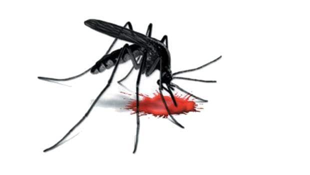 killer-mosquito