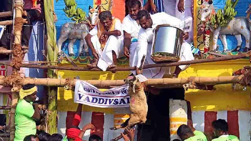 Madurai-Jallikattu-1