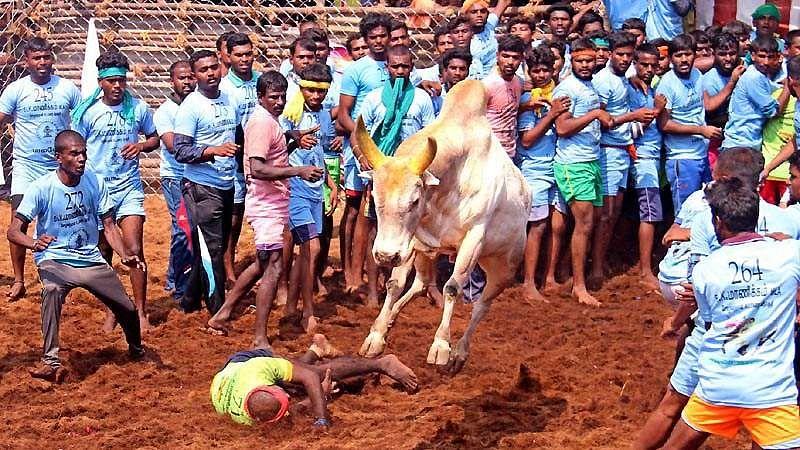 Madurai-Jallikattu-15