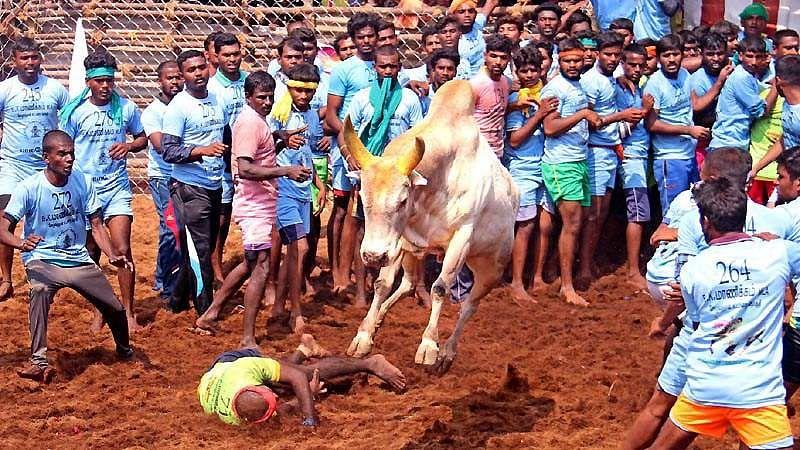 Madurai-Jallikattu-16