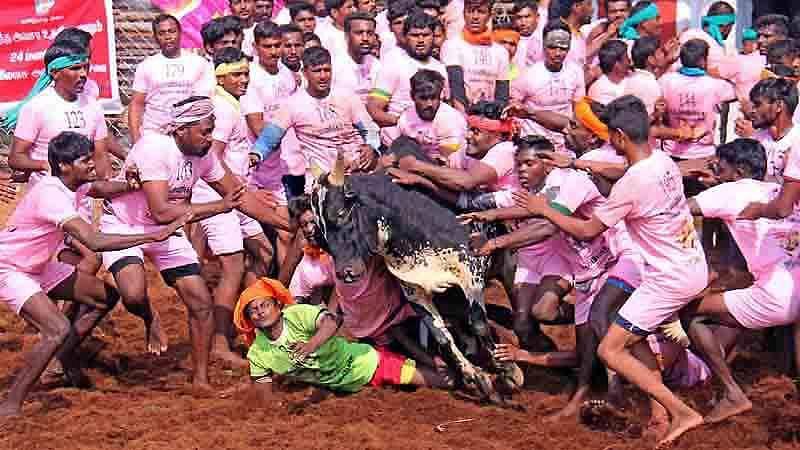 Madurai-Jallikattu-17