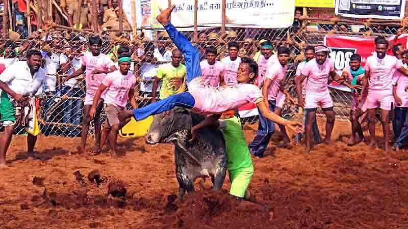 Madurai-Jallikattu-20