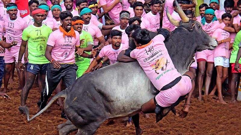 Madurai-Jallikattu-21