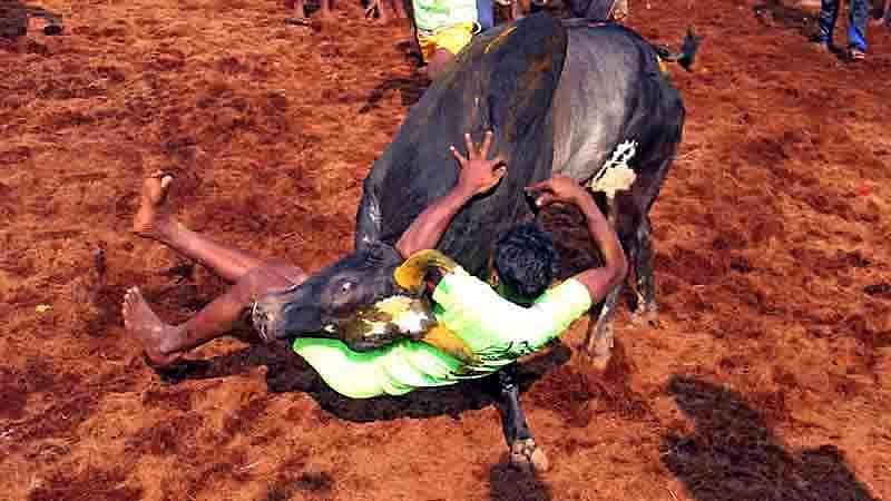 Madurai-Jallikattu-5