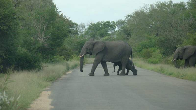 south-africa-jungle-31