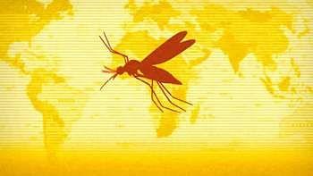 yellow_fever-1