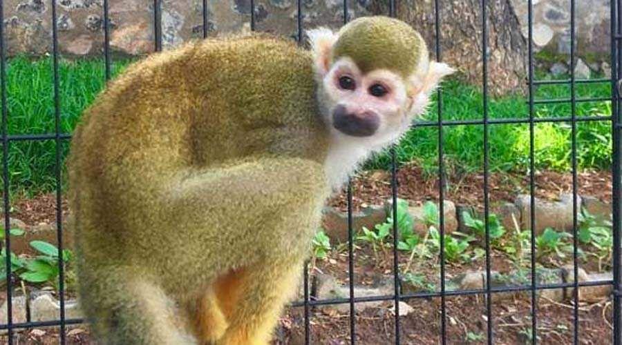வண்டலூர் பூங்காவில் புதிய வரவு Monkey-god-2
