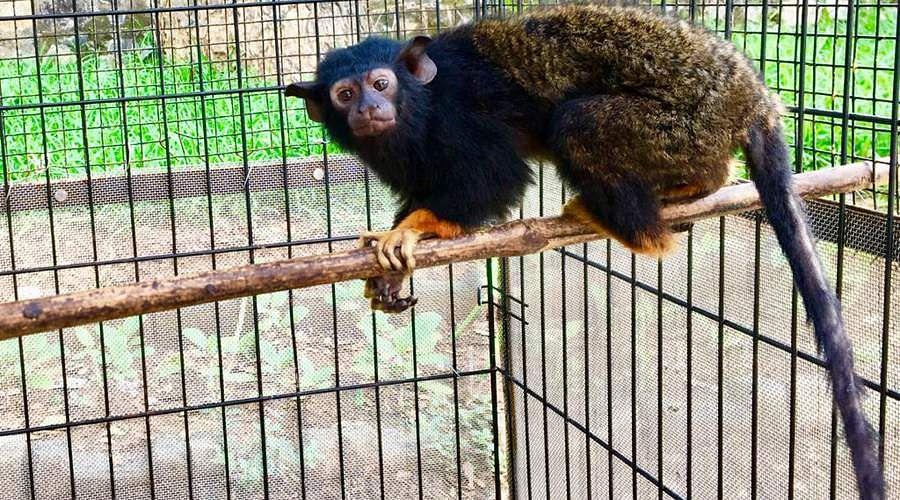 monkey-god-3