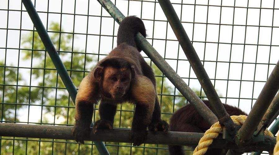 monkey-god-4
