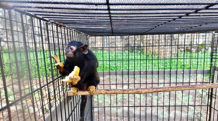 monkey-god-5
