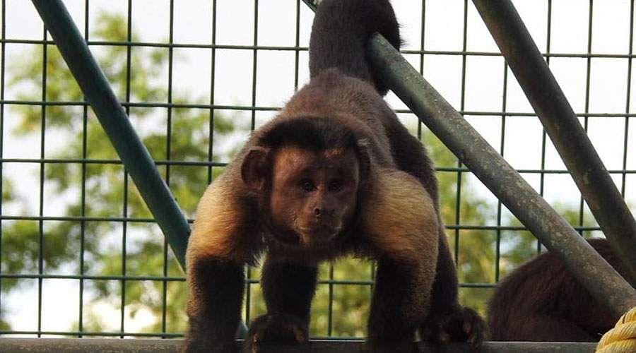 வண்டலூர் பூங்காவில் புதிய வரவு Monkey-god-7