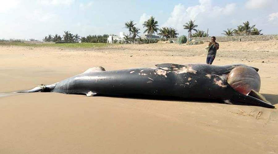 whale-7
