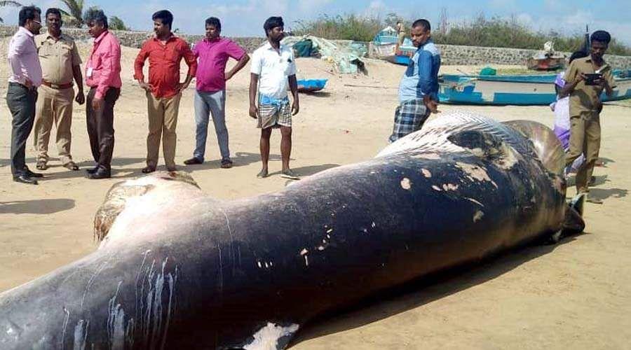 whale-9