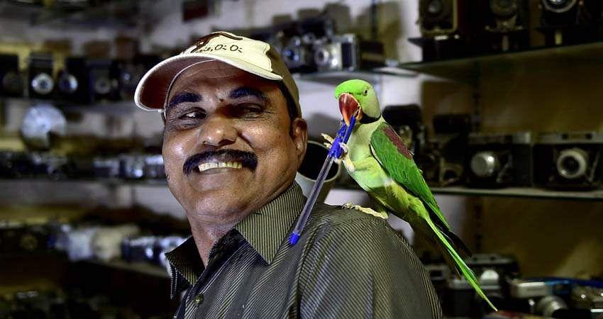 parrot-8