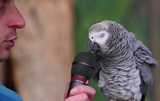 0000_talking_parrot