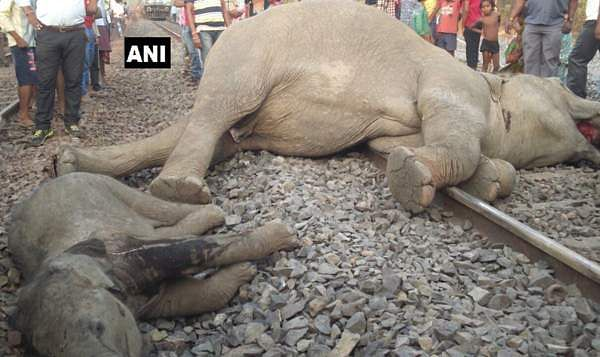 4-elephants-killed