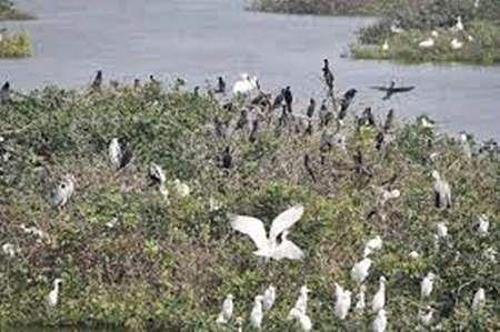 உலக வலசை போதல் தினம் Birds