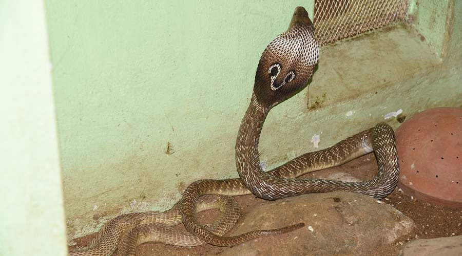 snakes-1