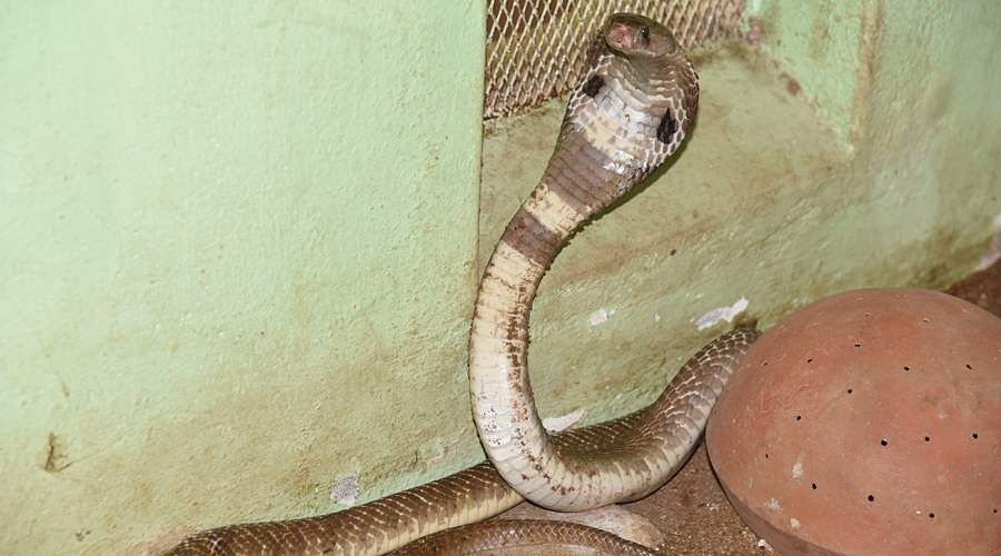 snakes-2