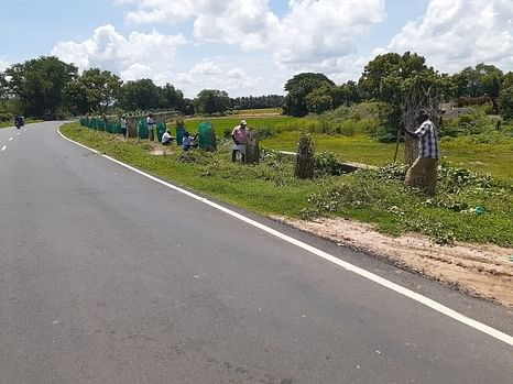 நீடாமங்கலம்- மன்னாா்குடி நெடுஞ்சாலையில் வைக்கப்பட்டுள்ள மரக் கன்றுகள்.