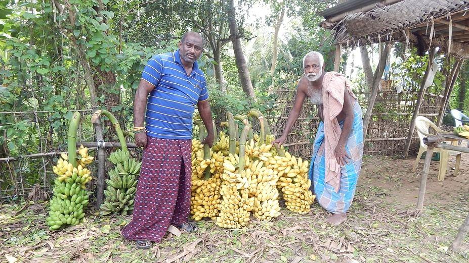bananan