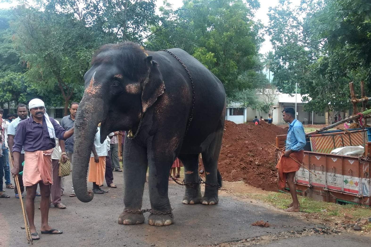 srivilliputhur_temple_elephant_2