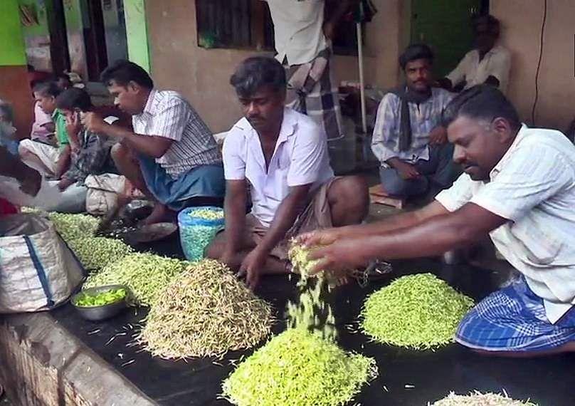 Madurai_jasmine_flower_price_1