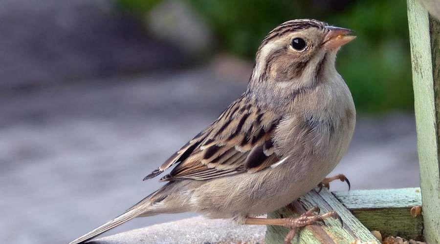 sparrow-10