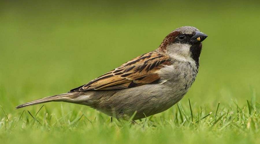 sparrow-14
