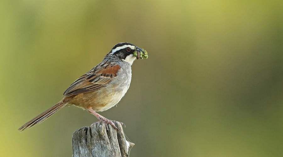 sparrow-15