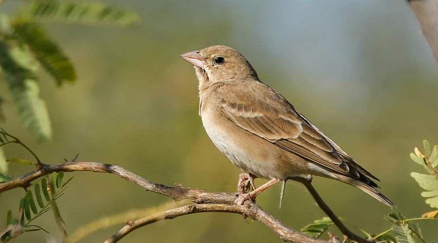 sparrow-19