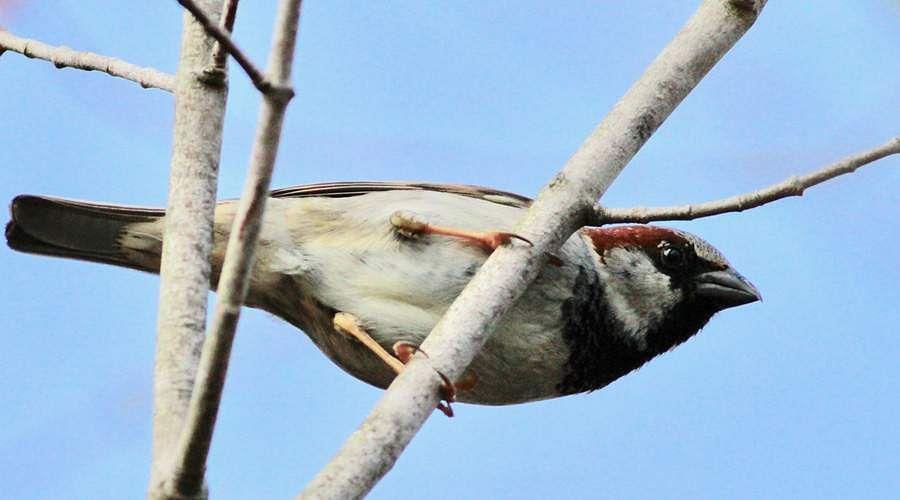 sparrow-20