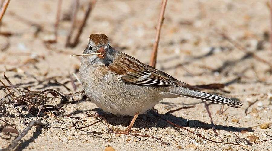 sparrow-23