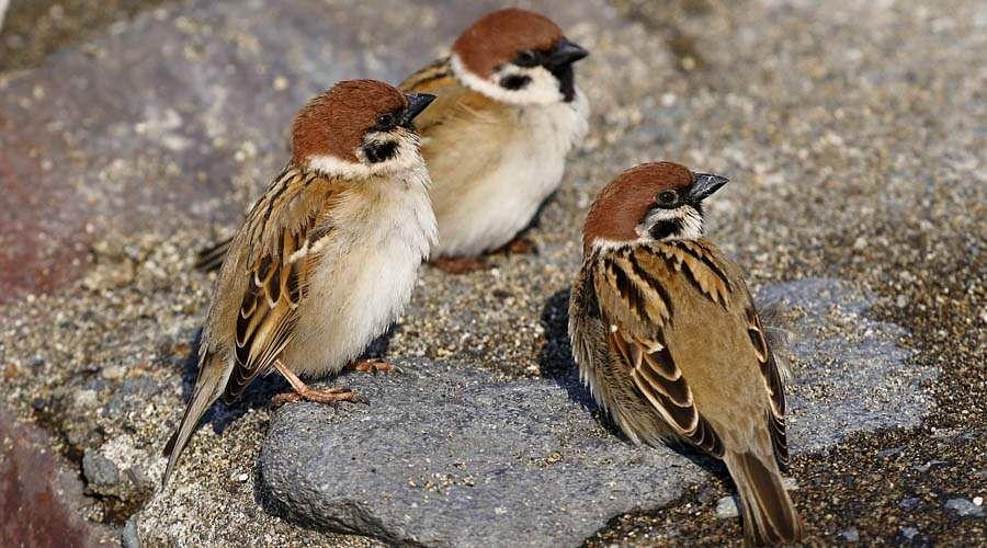 sparrow-24