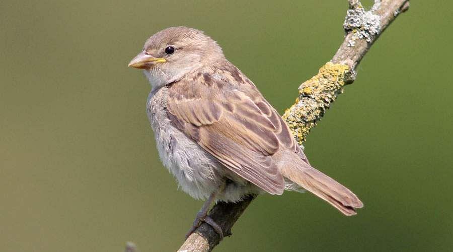 sparrow-28