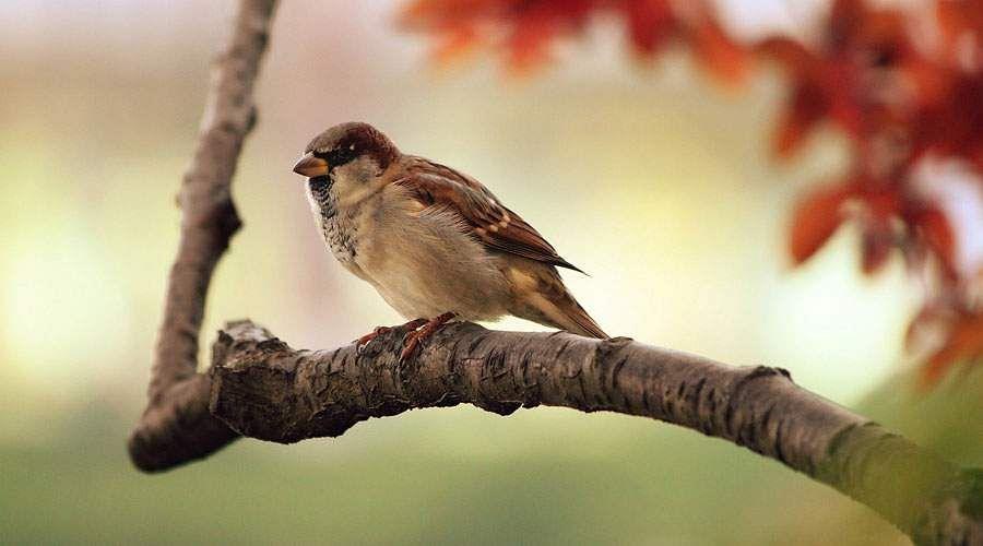 sparrow-30