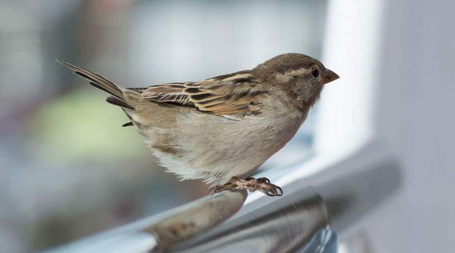sparrow-7